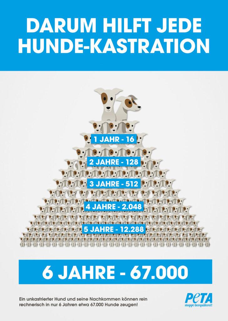 Infografik Hundekastration
