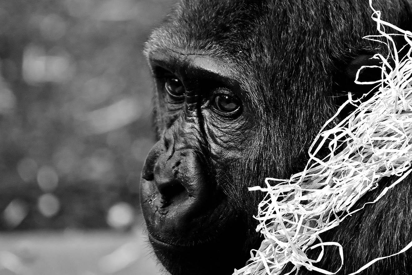 Brand im Zoo Krefeld: Darum sollten Sie alle Zoos boykottieren!