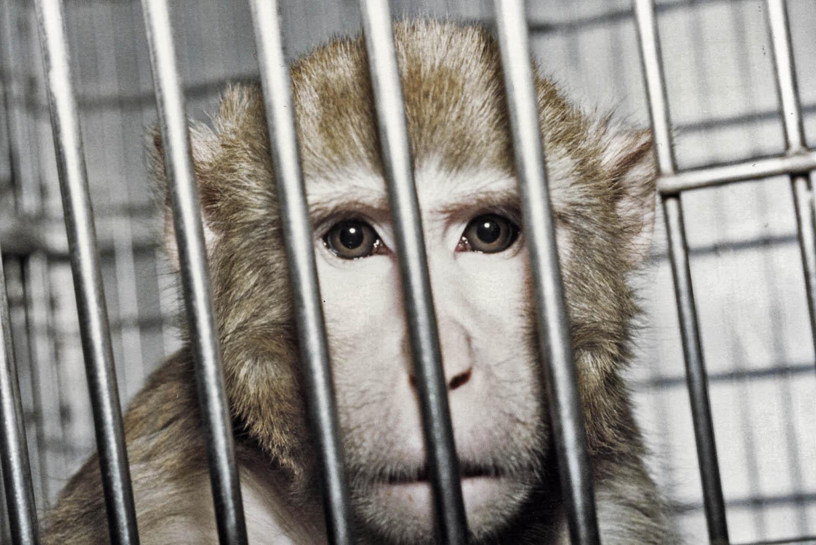 4 Gründe, warum Tierversuche noch immer durchgeführt werden