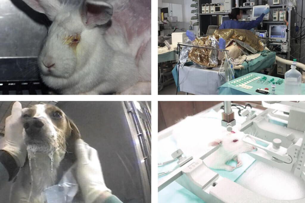 Tierversuche Collage
