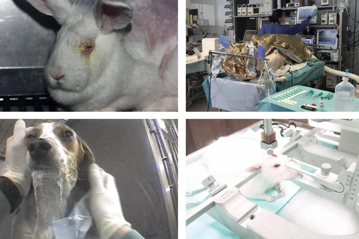 Tierversuche 2019: Fast 3 Millionen Tiere in Deutschland missbraucht
