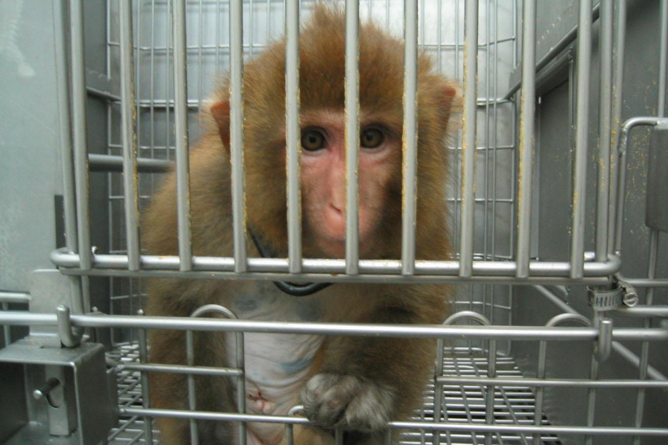 Flucht vor Ethik und Gesetz: Affenforscher Logothetis geht nach China