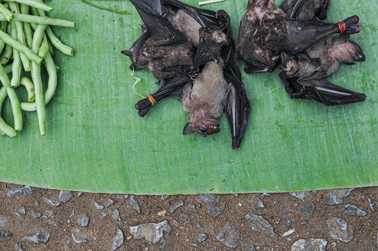 COVID-19, SARS, Ebola – 236 Organisationen fordern: Wildtiermärkte schließen