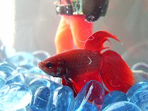 Gut bekannt Fische in Aquarien: Nein Danke! GJ18