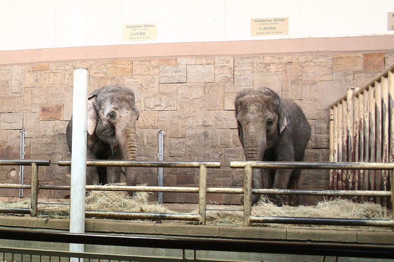 Geschützter Kontakt vs. direkter Kontakt bei Elefantenhaltung