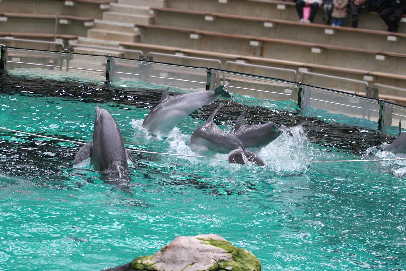 9 traurige Fakten über die Delfinarien in Duisburg und Nürnberg