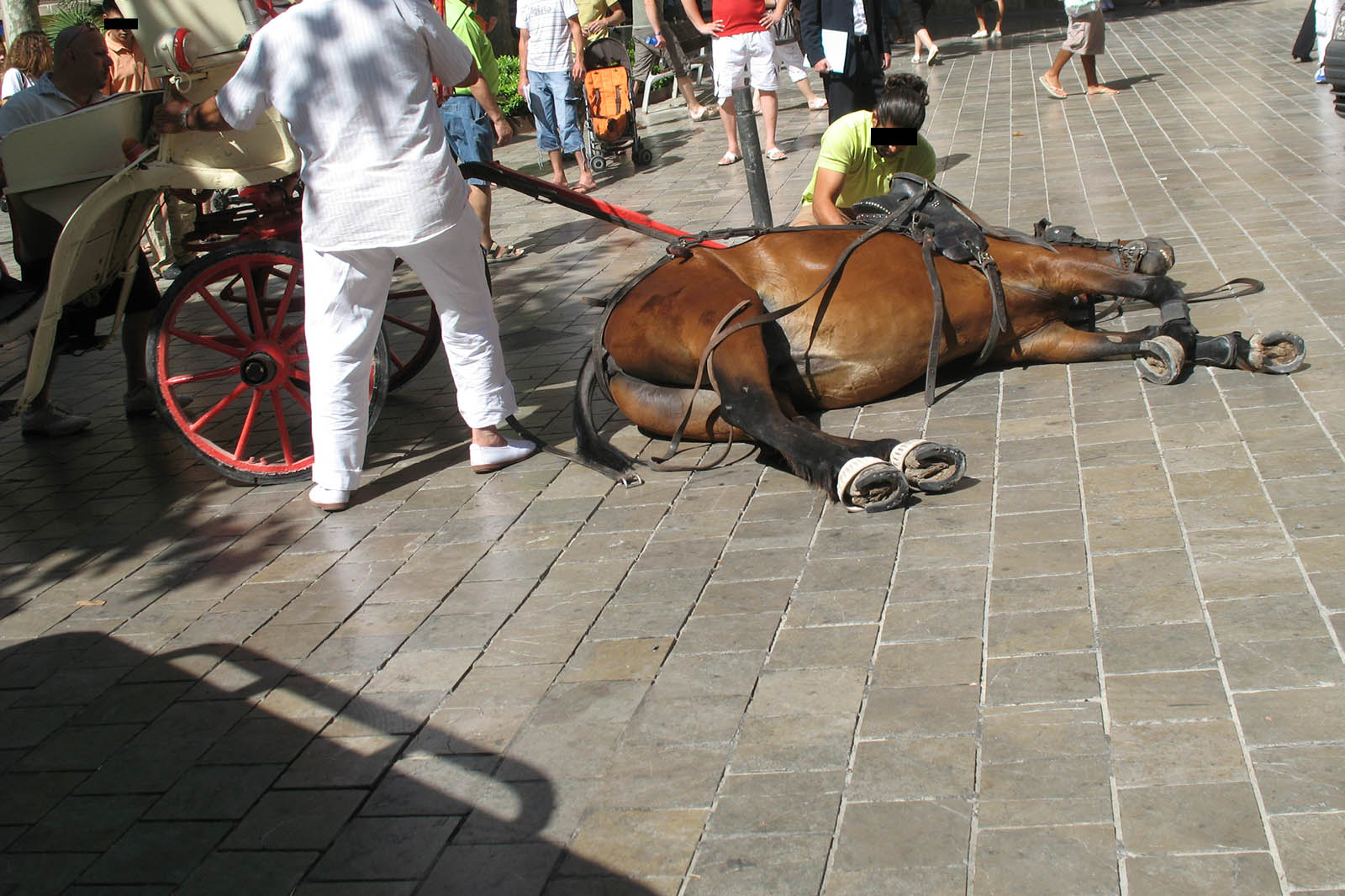 Pferdekutschen auf Mallorca endlich verbieten: Helfen Sie jetzt!
