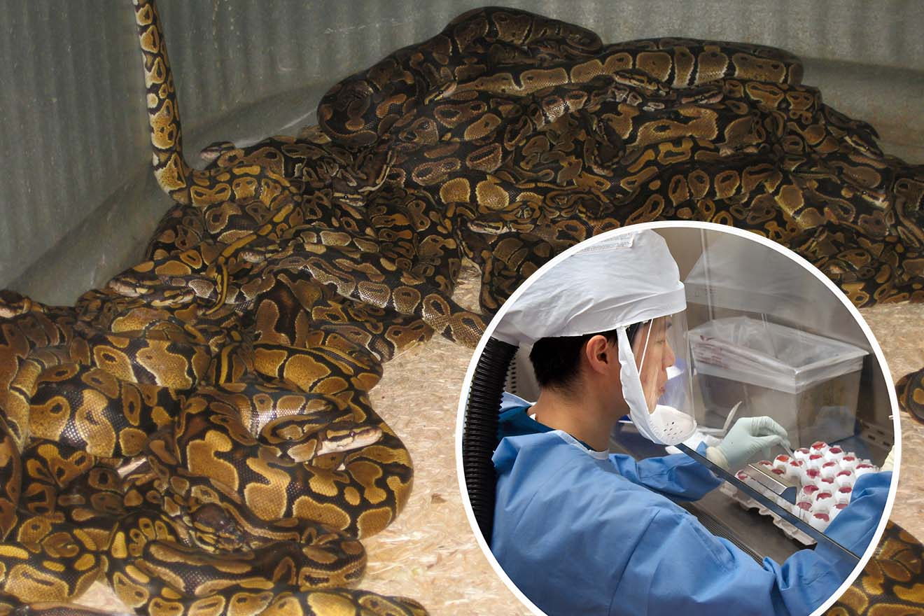 Coronavirus: Verbreitung durch einen Tiermarkt in Wuhan?