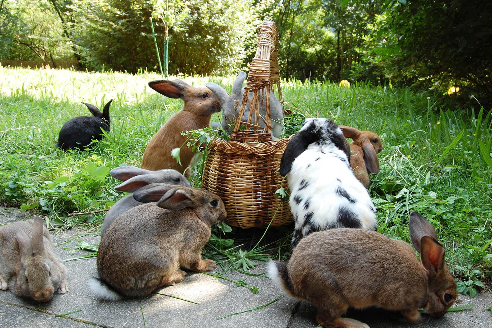 Kaninchen am futtern