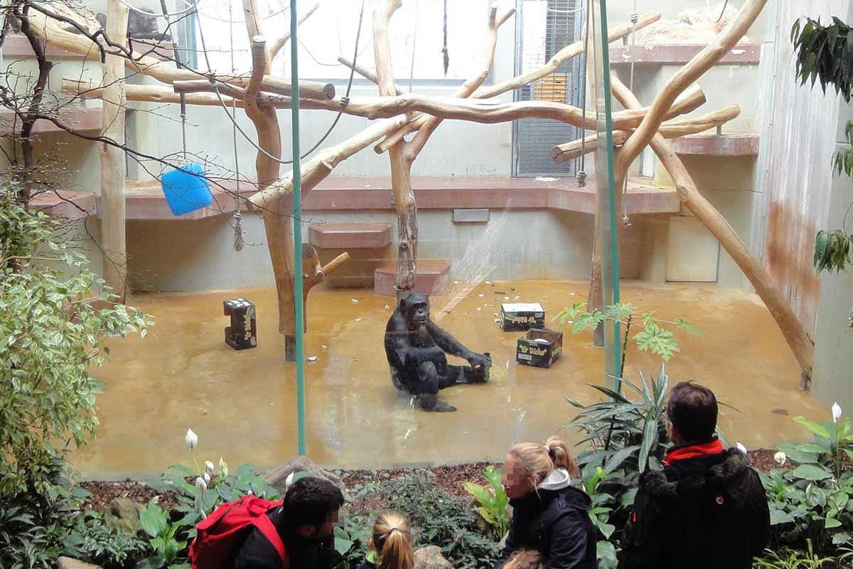 Subventionen für Menschenaffen-Gefangenschaft in Zoos