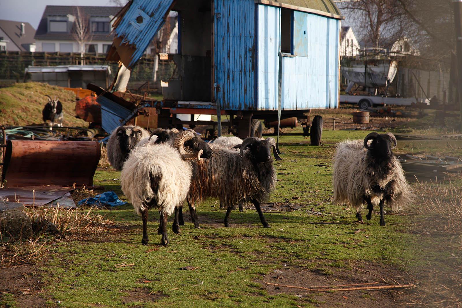 Vernachlässigte Tiere auf der Weide: So können Sie helfen