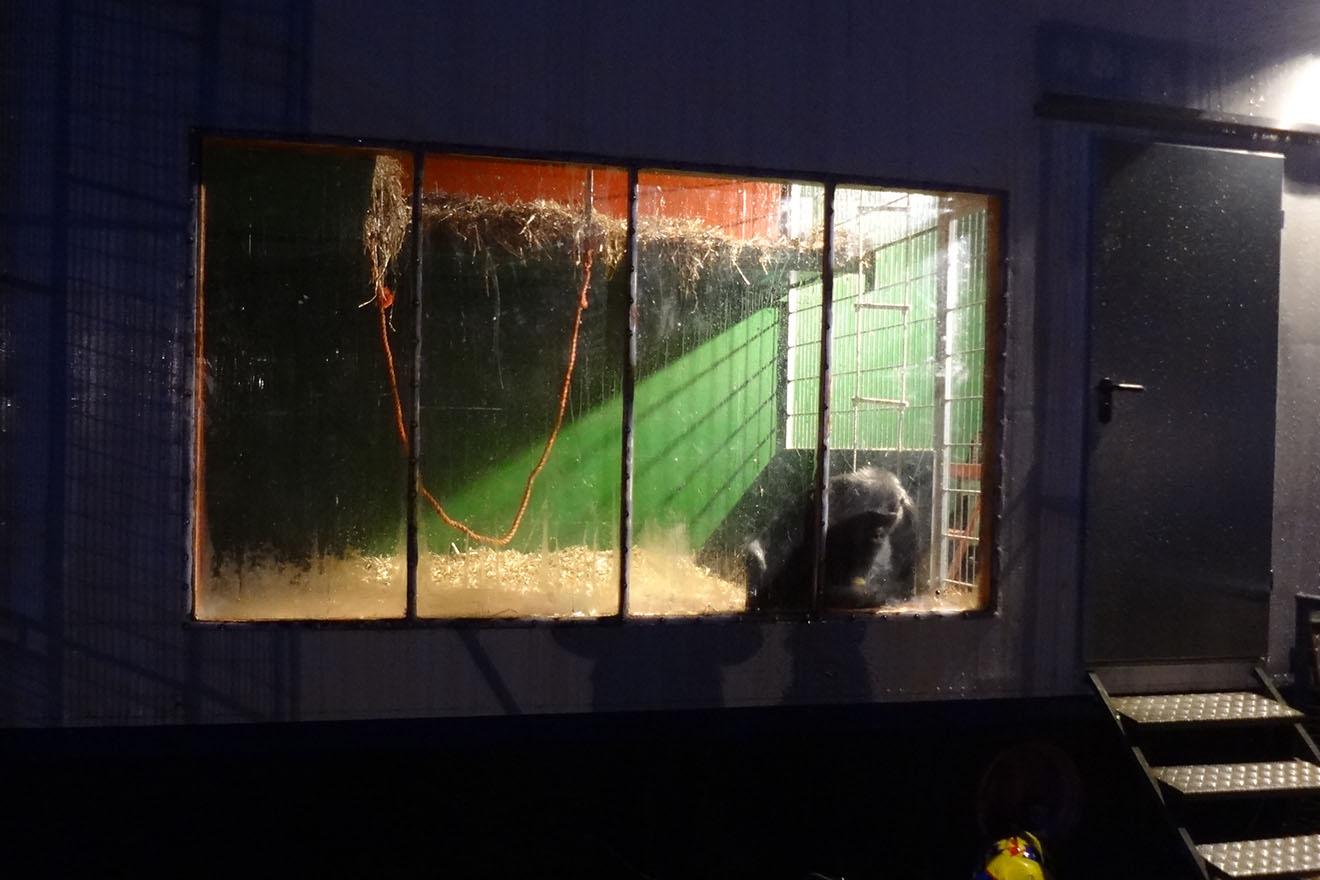 Mehr Platz für Schimpanse Robby – jetzt unterschreiben!