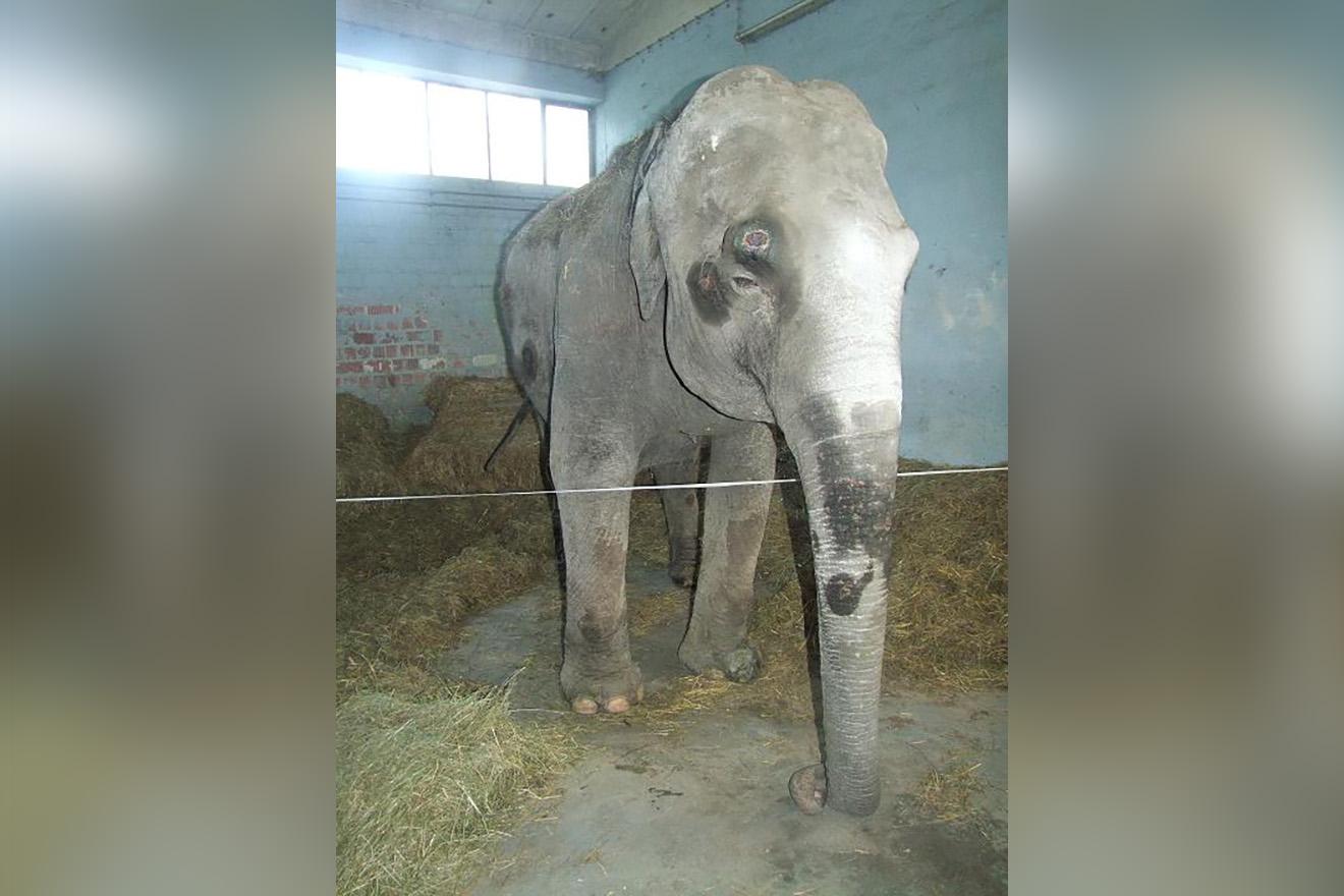 Elefantin Maya tot – Skandalöses Versagen der Veterinärbehörde