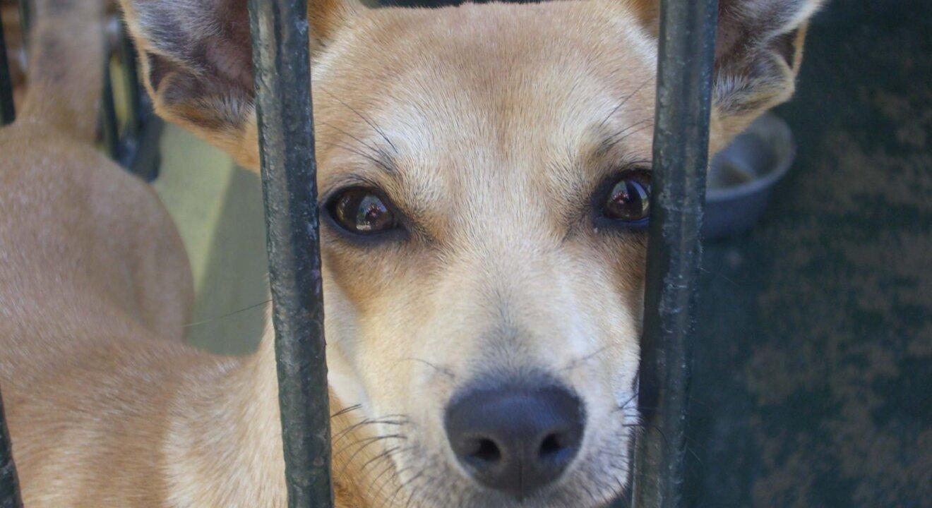 Hund im Zwinger