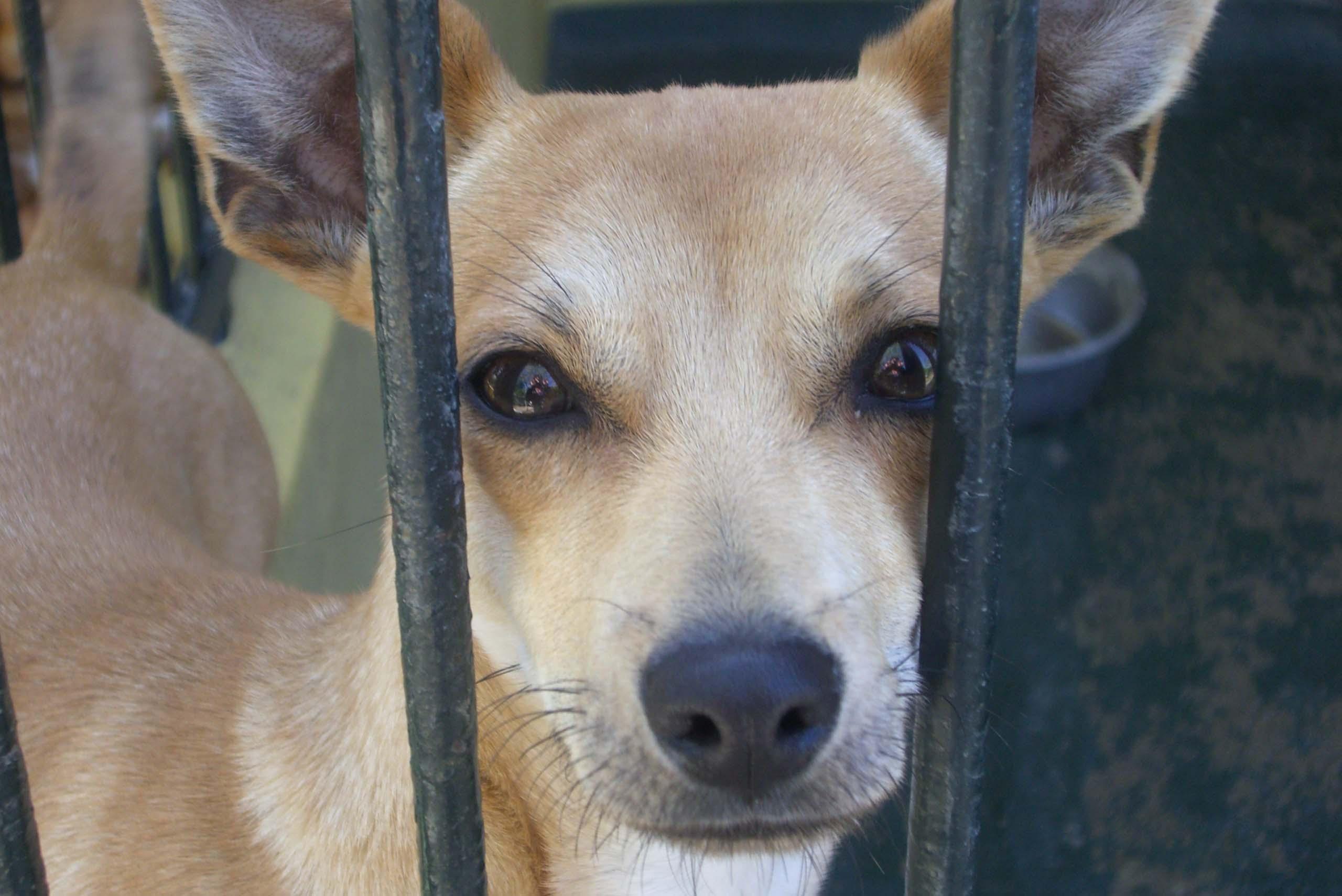 Hunde aus dem Ausland mitnehmen – geht das? Alle Infos