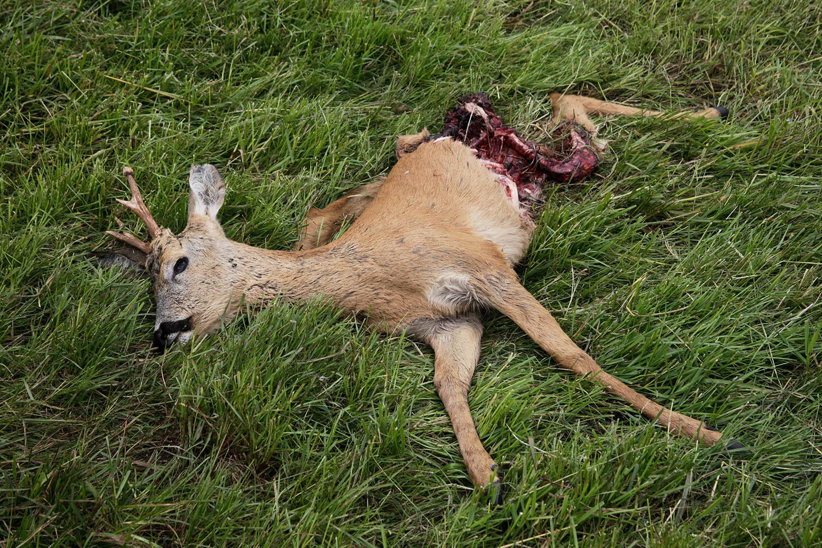 Die Jagd – unnötig, kontraproduktiv und grausam