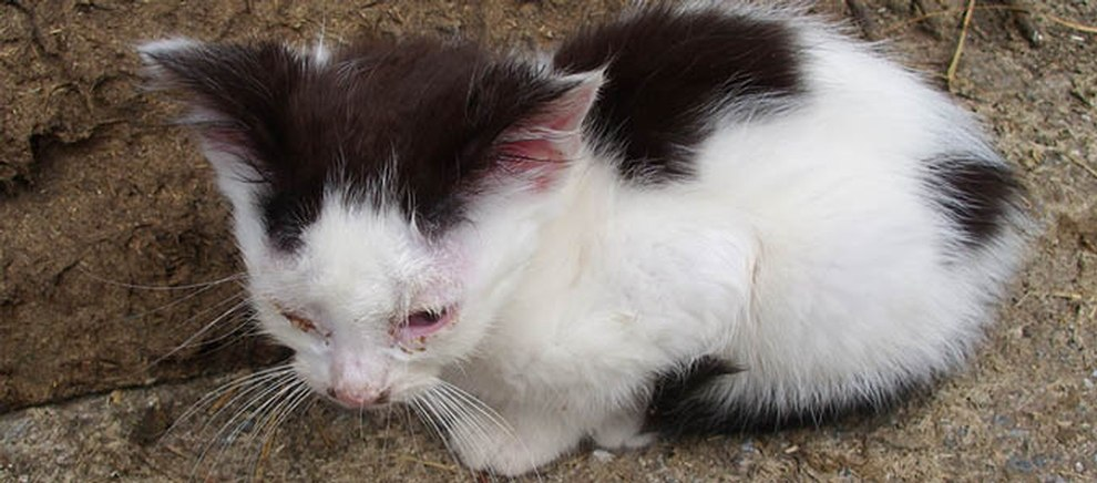 Daten-Webseiten für Tierfreunde