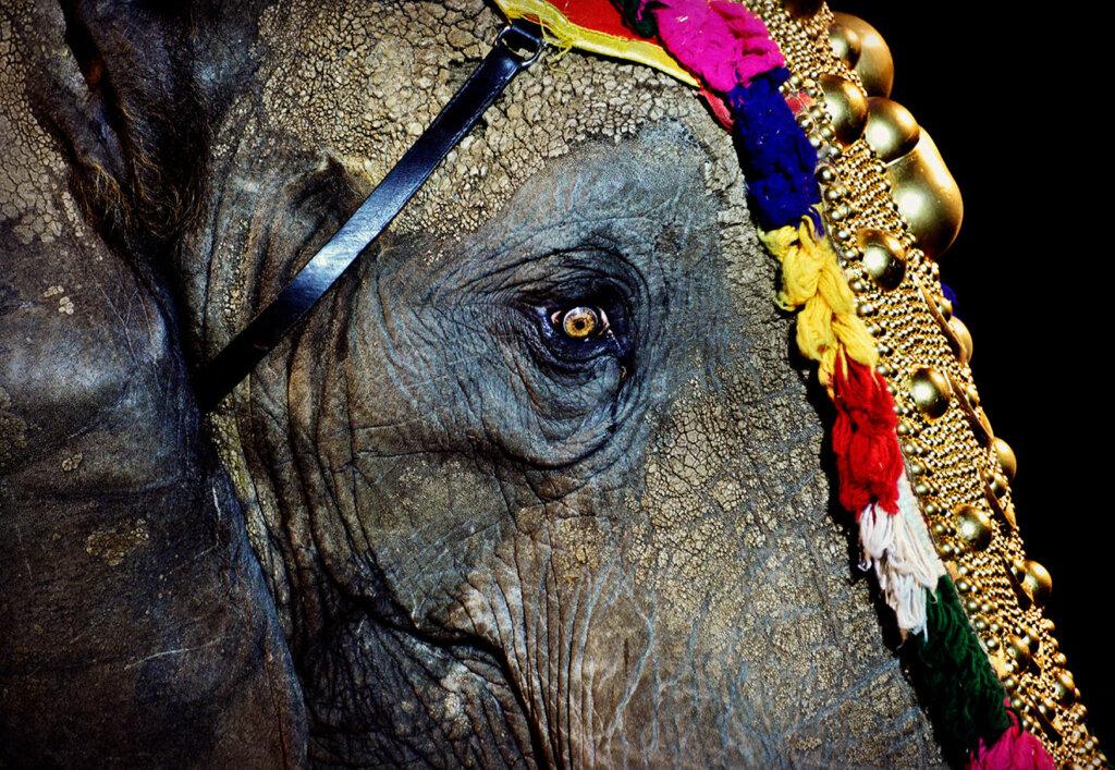 Elefant vom Circus Krone mit Kopfschmuck