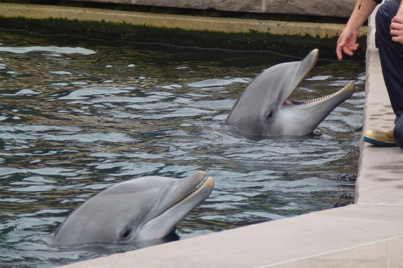 Delfine aus Meereszoos in Auffangstationen umsiedeln – jetzt helfen!