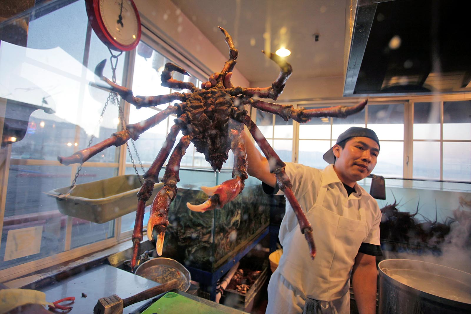 Mann haelt Hummer Krabbe in der Hand in der Kueche
