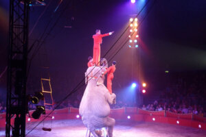 Person steht auf Elefanten in der Manege Zirkus Charles Knie