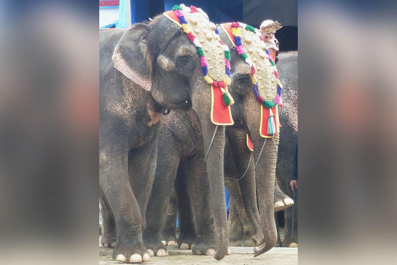 Petition: Circus Krone soll Bara und Burma den Ruhestand gönnen