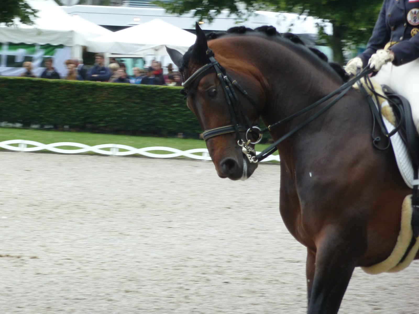 94237618b4131 Pferdesport – das stille Leiden der Pferde