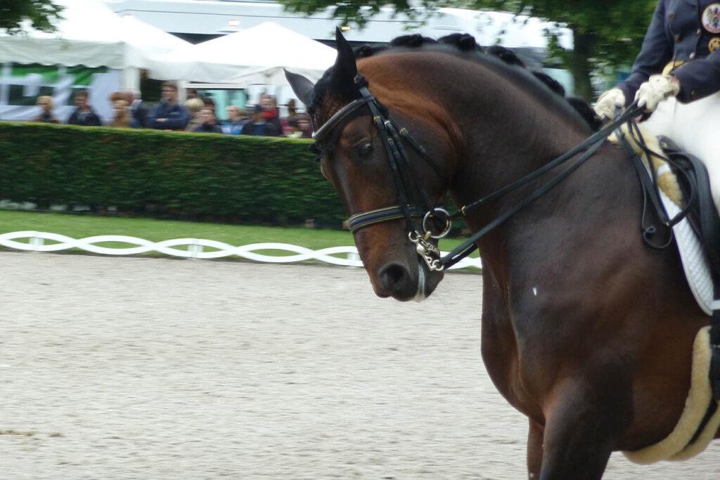 pferd mit dem kopf nach unten gerichtet