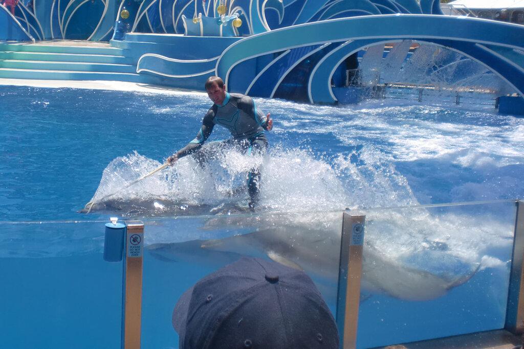Mann reitet auf Delfinen