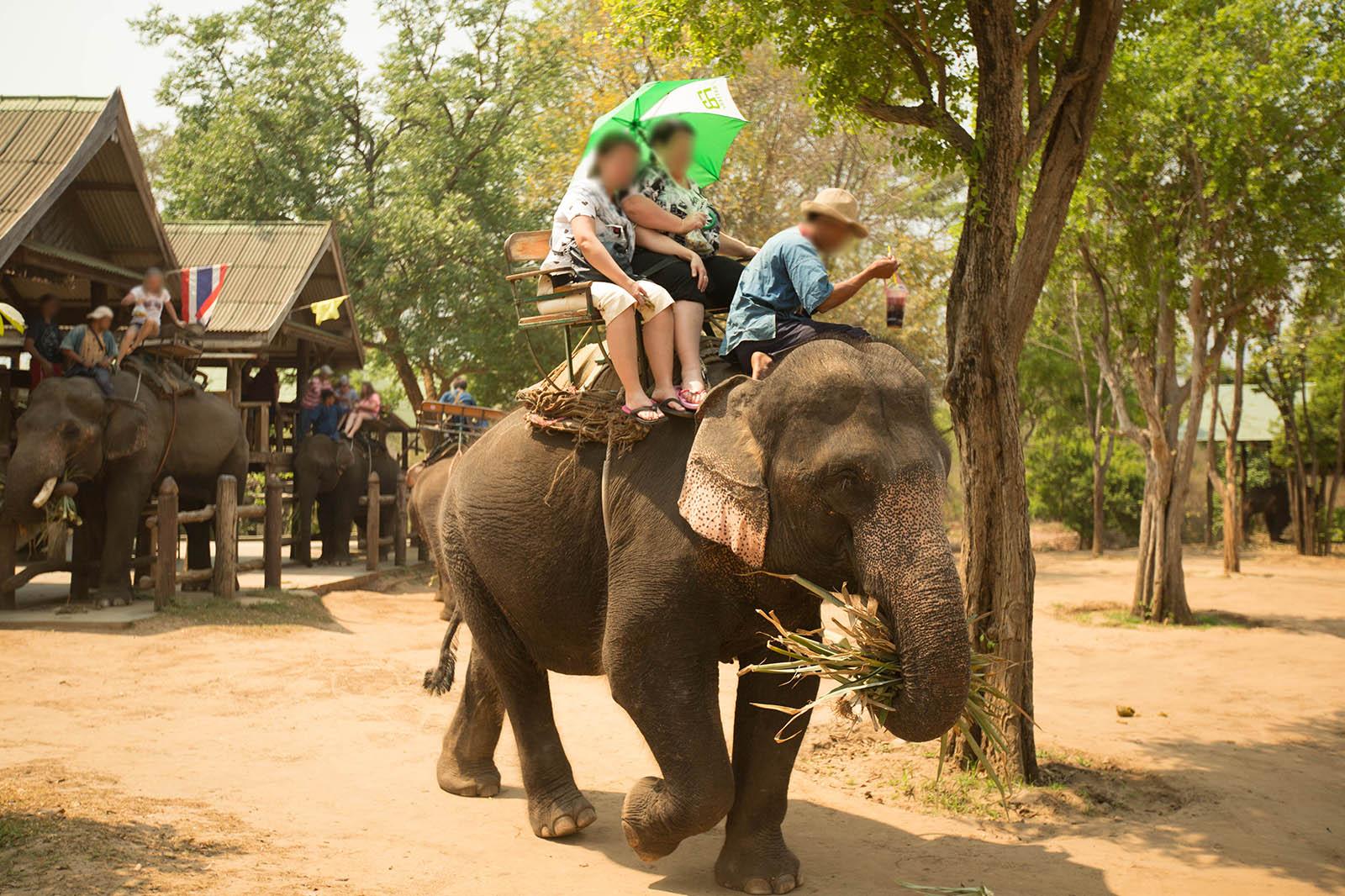 Tiere als Touristen-Attraktion: 7 Tierschutz-Fallen im Ausland