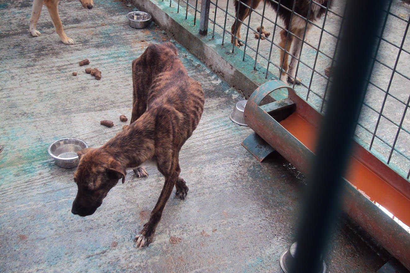 Orte des Todes: Das Leid der Hunde in rumänischen Tierheimen
