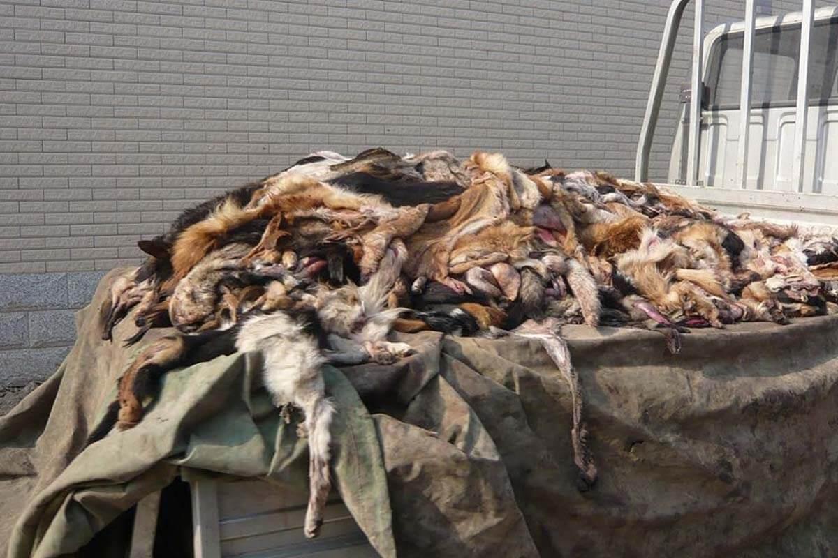 unbearbeitete Hundelederfelle auf einem Haufen