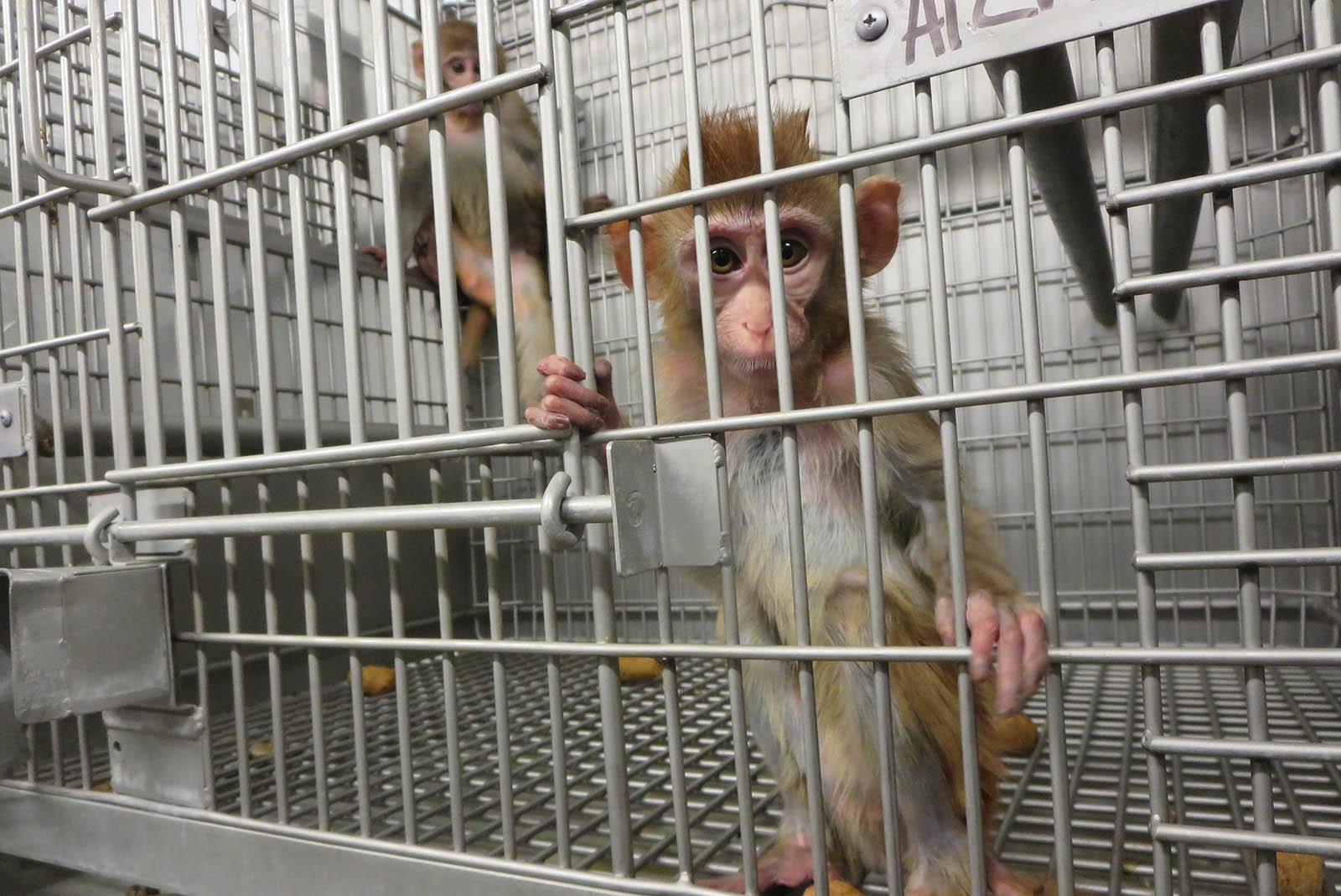 Video: 11 Fakten über Tierversuche, die Sie verblüffen werden
