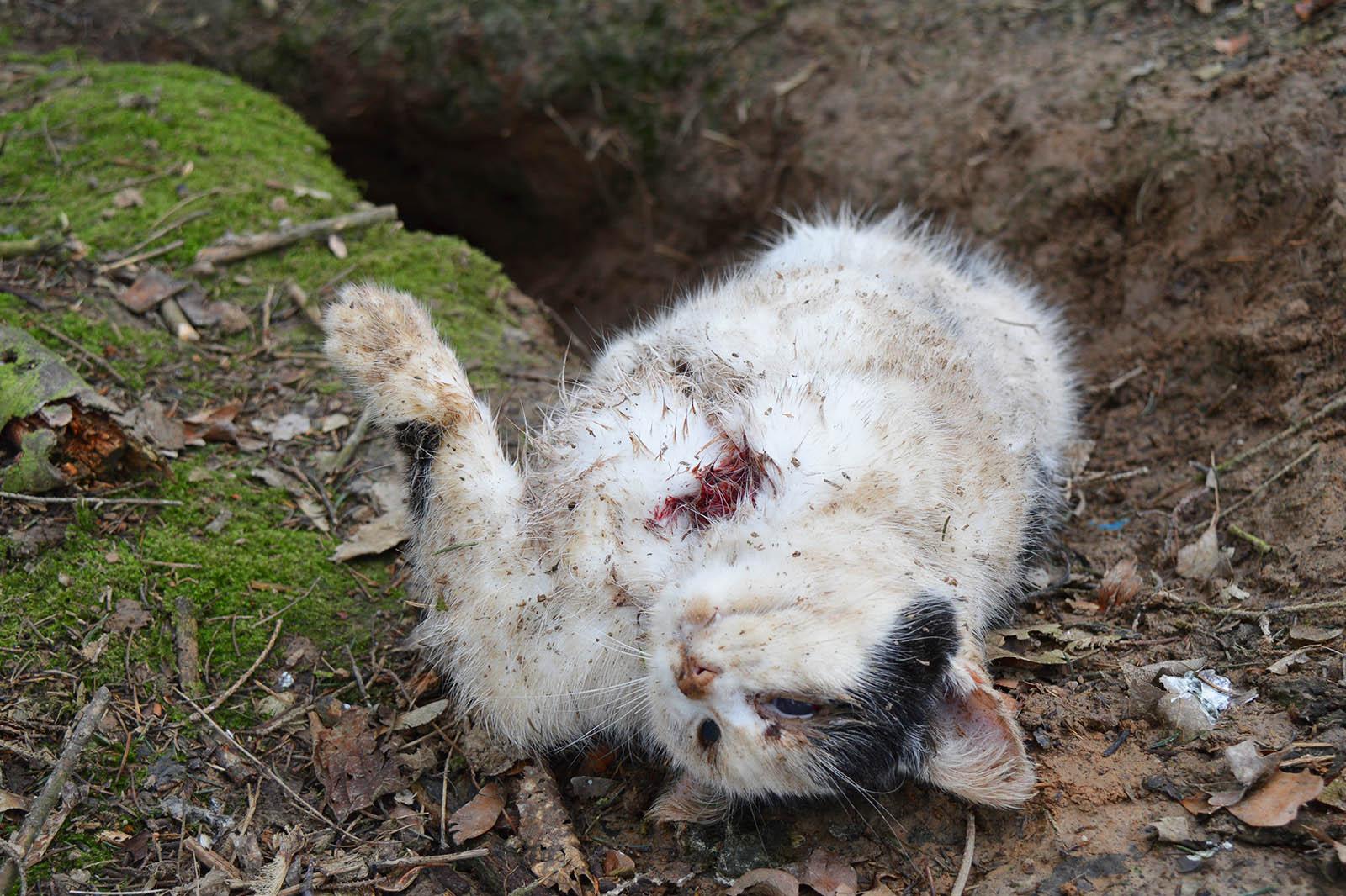 Katzenabschuss durch Jäger – unbegründet und grausam