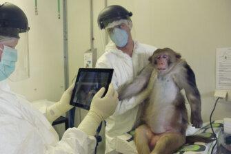 Tierversuche in Forschung und Medizin