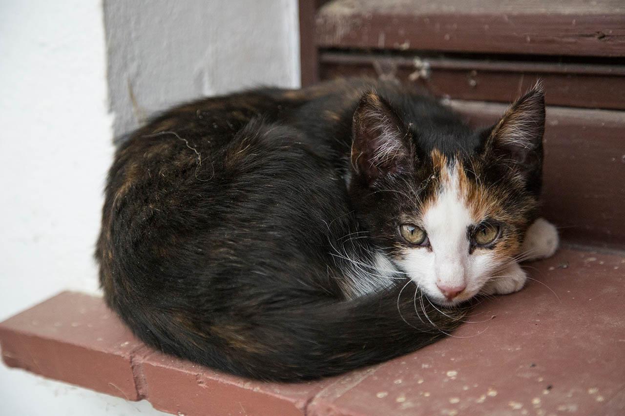 Katze zugelaufen oder gefunden: Was tun? Wen anrufen?
