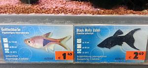fische in aquarien nein danke. Black Bedroom Furniture Sets. Home Design Ideas
