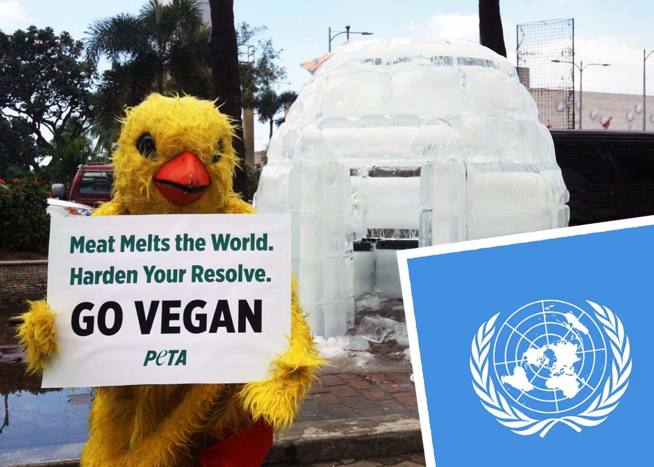Vereinte Nationen: Klimawandel stoppen – nur mit Fleischverzicht