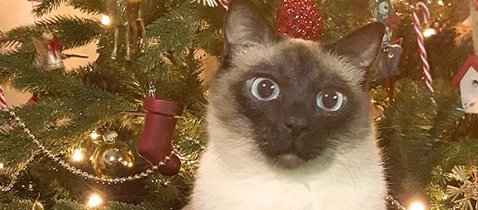 Verschenken Sie keine Tiere zu Weihnachten