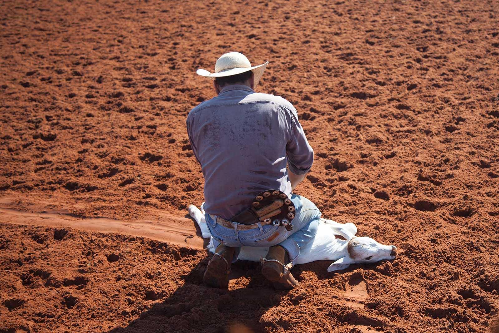 Ein Arbeiter drückt das Jungtier zu Boden.