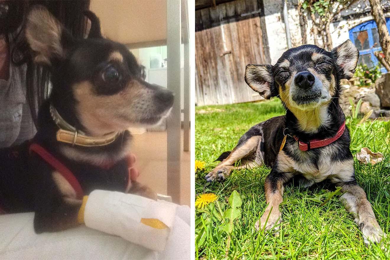 Emmi – diese Hündin wurde in einer Tierarztpraxis zurückgelassen