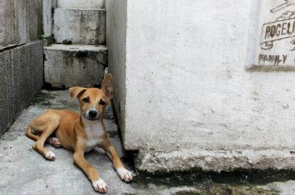 Hund liegt auf der Strasse