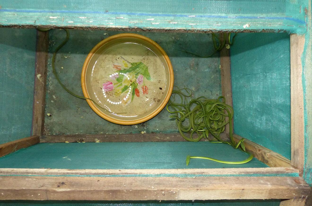 Box mit Schlangen und Wassernapf