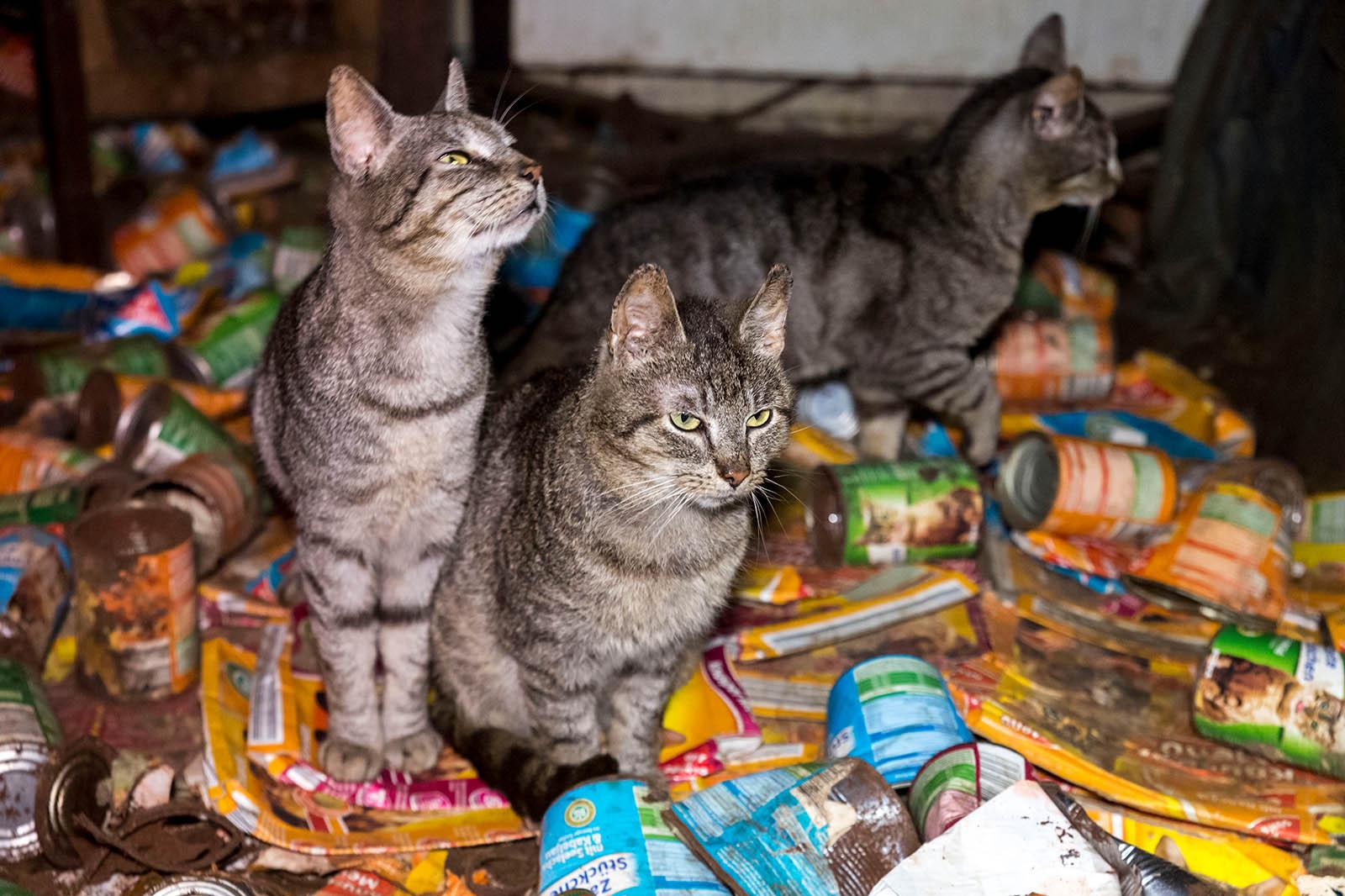 Animal Hoarding – wenn Menschen krankhaft Tiere sammeln