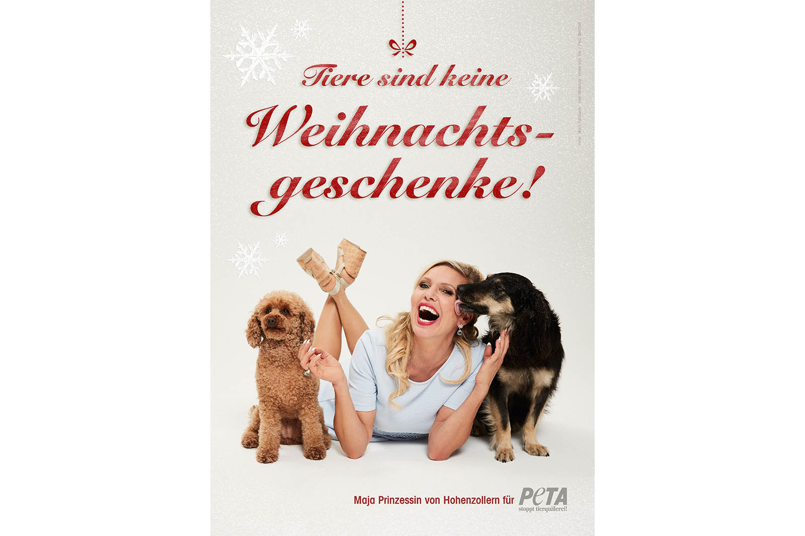 Deshalb sollten Sie zu Weihnachten keine Tiere verschenken
