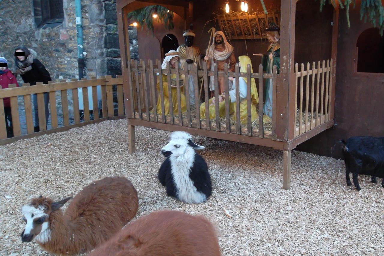 Lebende Krippe: Das Tierleid auf dem Weihnachtsmarkt