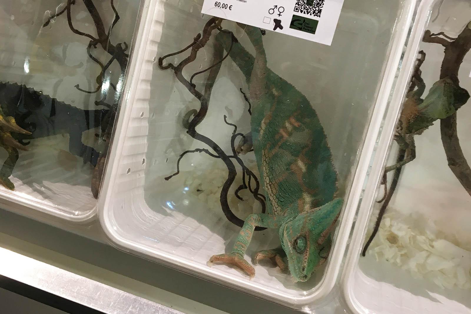 Reptilienbörsen – massive Tierquälerei und Ausverkauf der Natur