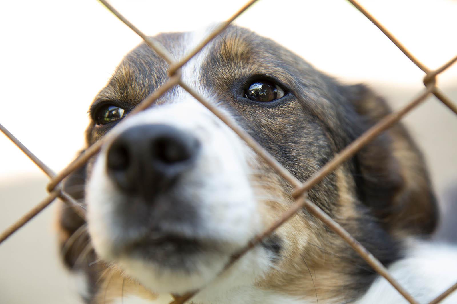 Darum ist es besser, ein Tier aus dem Tierheim zu adoptieren