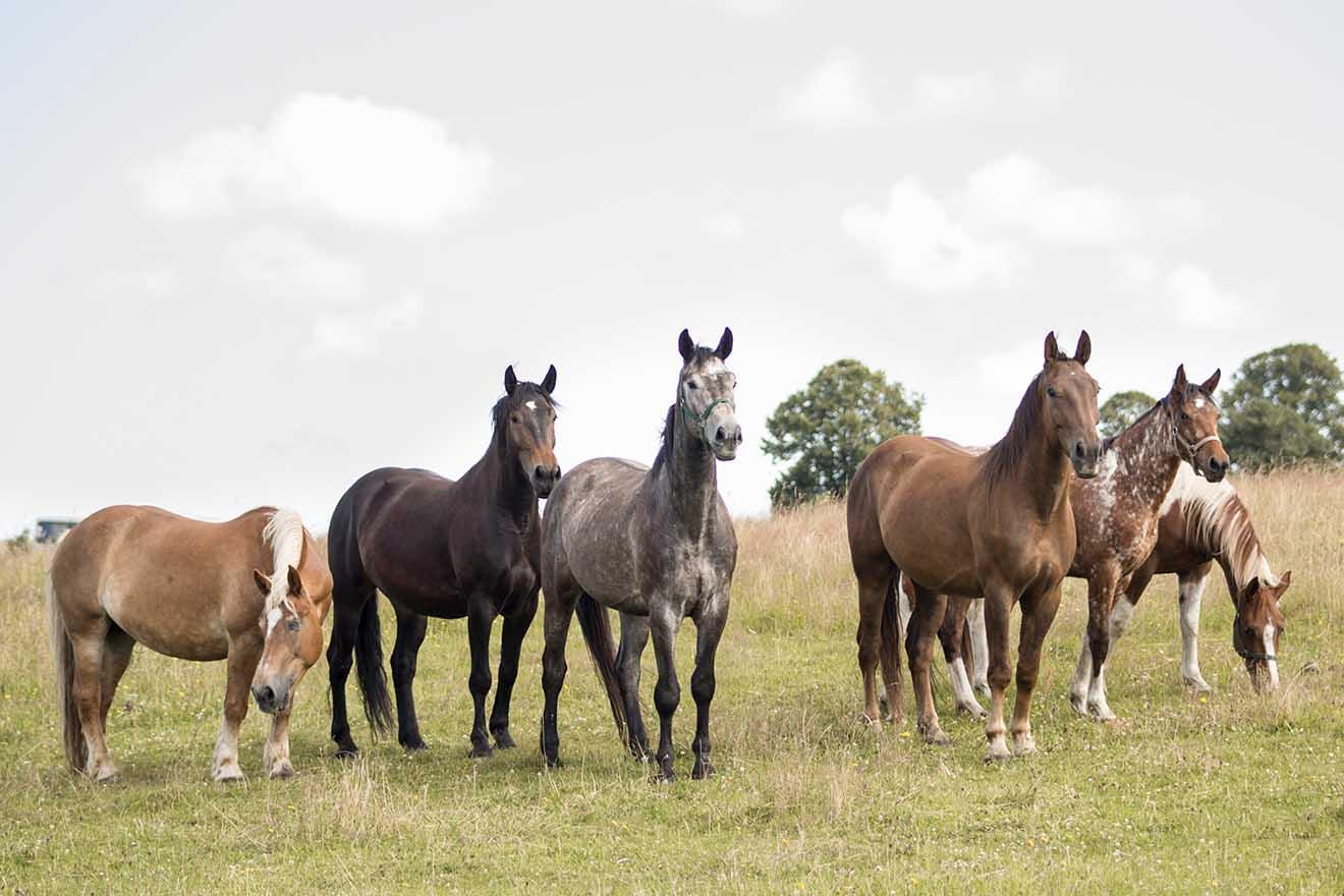 Mit Pferden auf Augenhöhe: Der artgerechte Umgang mit Pferden