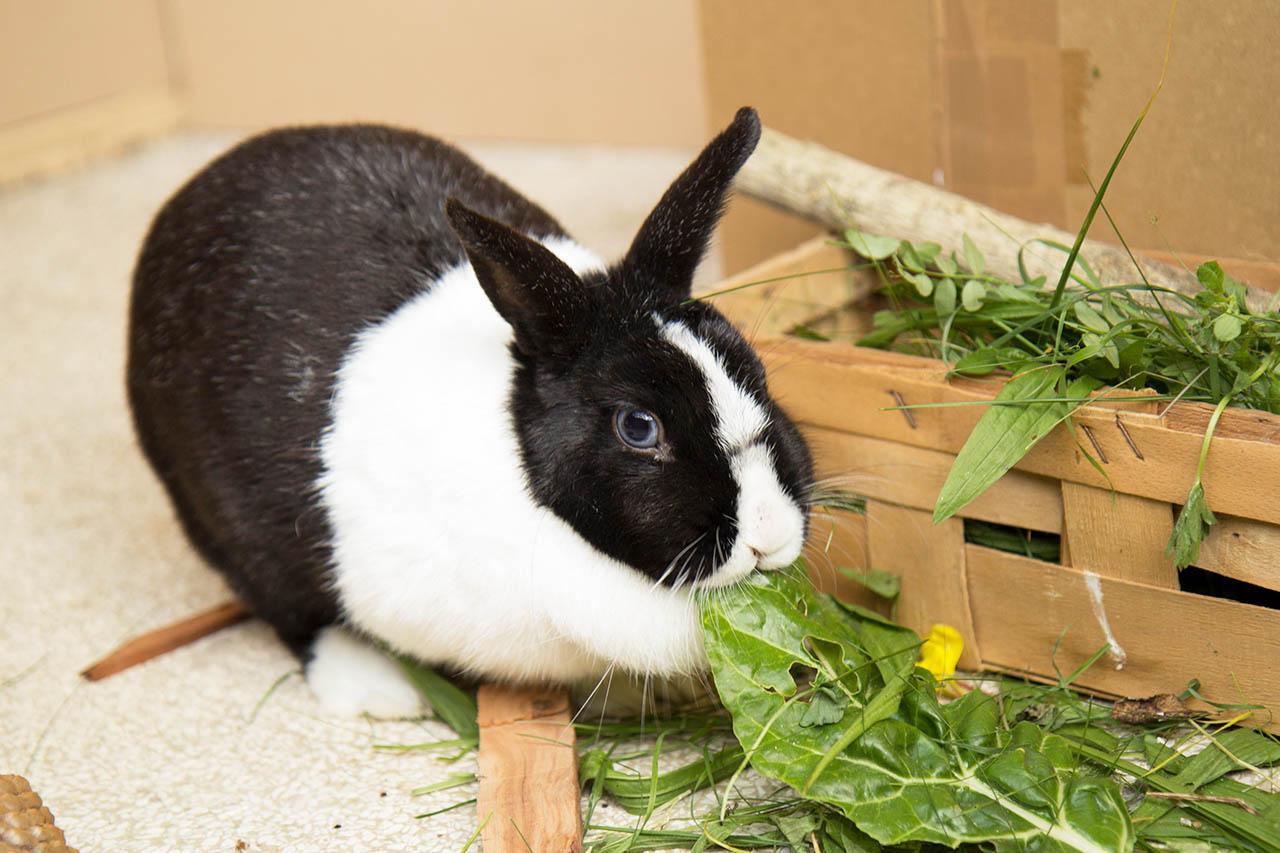 Kaninchenhaltung: Wie halte ich Kaninchen richtig?